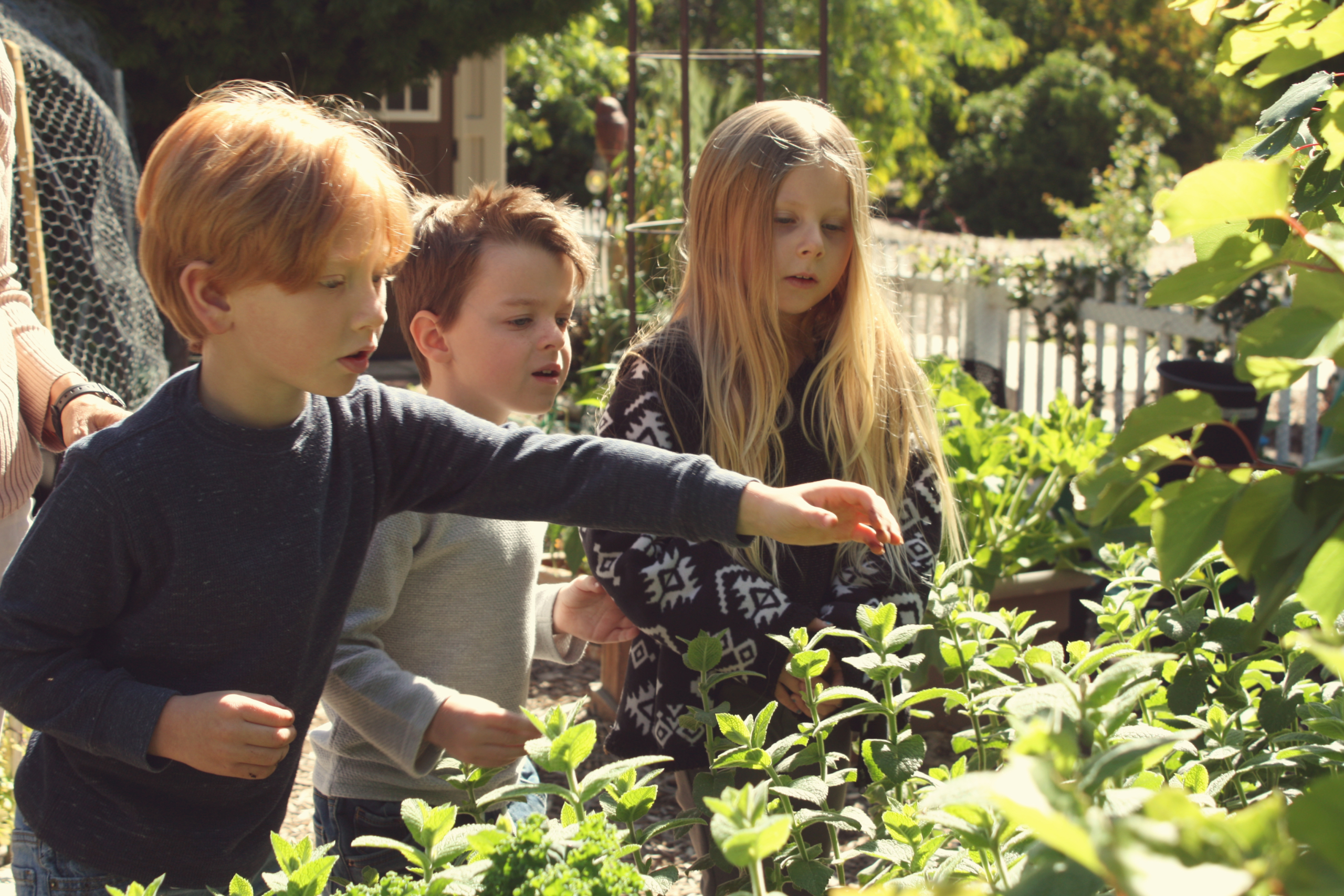 Children in the Anne Sullivan Preschool and Kindergarten Garden